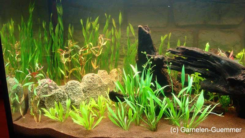 Aquarium Guemmer Sand braun 0,4-0,8mm